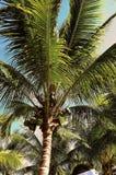 gammal kokosnötdesigngrunge gömma i handflatan retro stil för vykort Arkivfoton