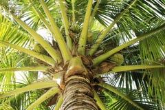 gammal kokosnötdesigngrunge gömma i handflatan retro stil för vykort Royaltyfri Fotografi