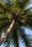 gammal kokosnötdesigngrunge gömma i handflatan retro stil för vykort royaltyfri bild