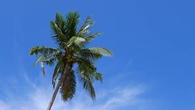 gammal kokosnötdesigngrunge gömma i handflatan retro stil för vykort stock video