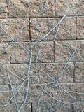 Gammal konkret stenvägg Arkivbild