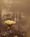 gammal konstnärlig danad blomma Royaltyfri Bild