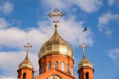 Gammal kristen kyrka för röd tegelsten med guld- och förgyllda kupolagains ovanför mörkt flyghav för fågel öppna seagullvingar arkivbilder