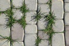 Gammal kullerstenbakgrund med gräs övre sikt Royaltyfria Bilder