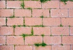 Gammal kullerstenbakgrund med gräs royaltyfri fotografi