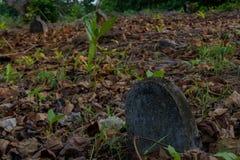 Gammal kuslig gravplats med gravar på den tropiska lokala ön Fenfushi Royaltyfria Foton