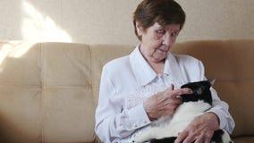 Gammal kvinna som slår en katt, farmor som spelar med en katt, ultrarapid arkivfilmer