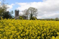 Gammal kyrka i ett fält av guling Arkivfoto