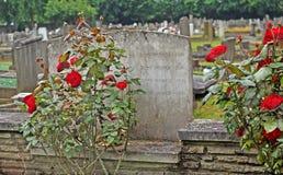 Gammal kyrkogårdkrigminnesmärke Royaltyfri Foto