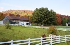 Gammal ladugård med hästar i landet på en nedgångdag Royaltyfri Fotografi
