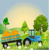 Gammal ladugård och grönt fält Arkivbild