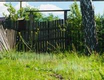 Gammal lantlig träport nära grönt gräs för friskhet Fotografering för Bildbyråer