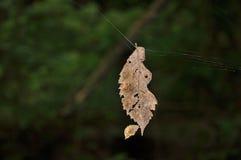 gammal leaf Royaltyfri Fotografi