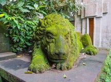 Gammal lejonskulptur som täckas av grön mossa i den Ubud apaskogen, Bali, Indonesien arkivfoto