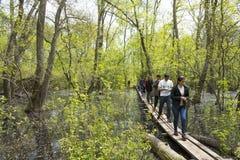 Gammal Letea skog, Rumänien Fotografering för Bildbyråer