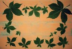 Gammal målad trätabell med nya gröna kastanjebruna sidor mot bakgrund field bl?a oklarheter f?r gr?n vitt wispy natursky f?r gr?s royaltyfria bilder