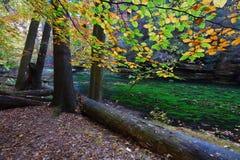 Gammal magisk forst med stupade orange sidor in i floden Mystisk höstskog fotografering för bildbyråer