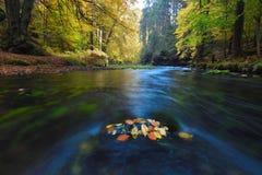 Gammal magisk forst med stupade orange sidor in i floden Mystisk höstskog arkivfoton