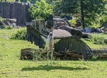 Gammal marabu med brutet posera för vinge Fotografering för Bildbyråer