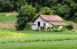 Gammal Michigan ladugård i ett fält Arkivbilder
