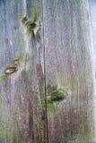 Gammal målad wood vägg - textur eller bakgrund Royaltyfria Bilder