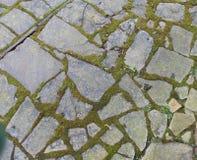 Gammal mossig tegelstenväg Arkivbild