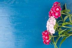 Gammal naturlig blå bakgrund för rosa vit härlig blommatappning Royaltyfria Foton