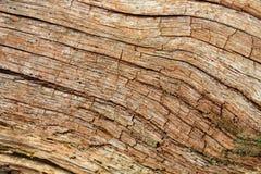 gammal oak Arkivbild