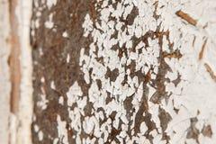 Gammal och skalad knarrande målarfärg, i kurs av tid den vita signalen av plankorna knastrade, wood textur, bakgrund Royaltyfri Foto