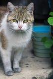 Gammal och smutsig katt Royaltyfri Fotografi