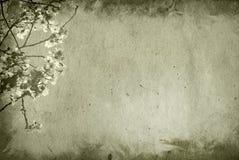 gammal paper textur för bakgrundsblomma Royaltyfri Bild