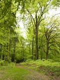 gammal park Arkivbilder