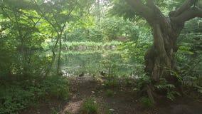 gammal park för bronze möblemanglake Arkivbild