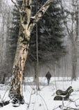 gammal park för häftig snöstorm Royaltyfria Bilder