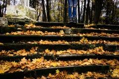 gammal park för höst Fotografering för Bildbyråer