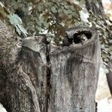 gammal parktree Tvärsnitt av trädet arkivfoton