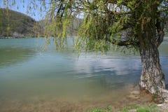 Gammal pil på kusten av dammet i Abrau-Durso Arkivbilder