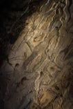 Gammal planka, med wood fnuren och knäckt Royaltyfri Foto