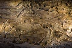 Gammal planka, med wood fnuren och knäckt Arkivbilder
