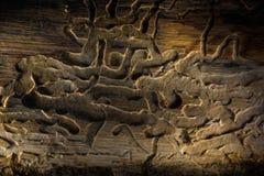 Gammal planka, med wood fnuren och knäckt Arkivbild
