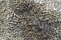 Gammal porös closeup för stenyttersidatextur arkivfoto