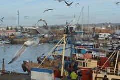 Gammal port av Essaouira, Marocko Fotografering för Bildbyråer