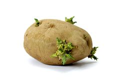 Gammal potatis på vit bakgrund Royaltyfria Foton