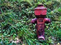 Gammal röd brand på bakgrund för grönt gräs Brandpost för nöd- brandtillträde Brandpost mot en frodig grön gräsmatta arkivfoto