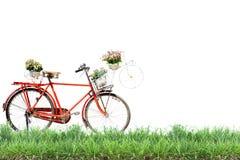 Gammal röd cykel med korgblommor och grönt gräs på vit bakgrund Royaltyfri Bild