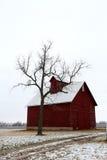 Gammal röd ladugård och kalt träd i Illinois Arkivfoto