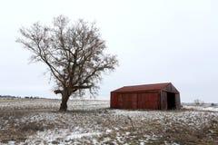 Gammal röd ladugård och kalt träd i vinter i Illinois Arkivbilder