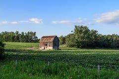 Gammal röd ladugård på grönt bondefält royaltyfri foto