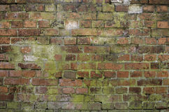gammal röd vägg för tegelsten Royaltyfri Foto