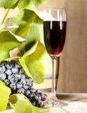 Gammal rött vin i exponeringsglas med vinen och druvan Royaltyfri Bild